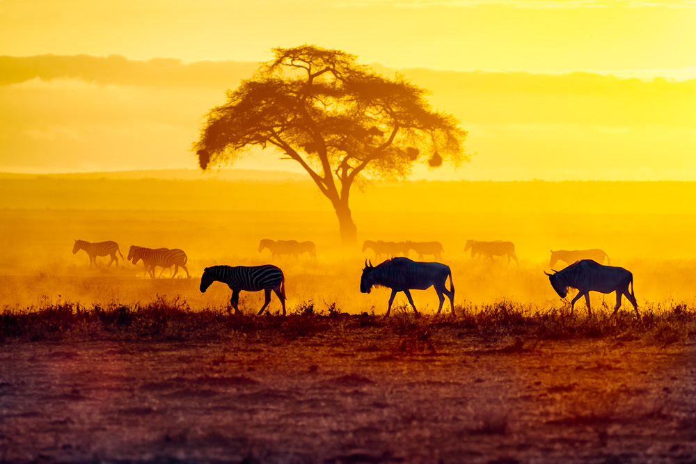 Fotoreise Kenia, Benny Rebel, Gnuherde, Sonnenuntergang