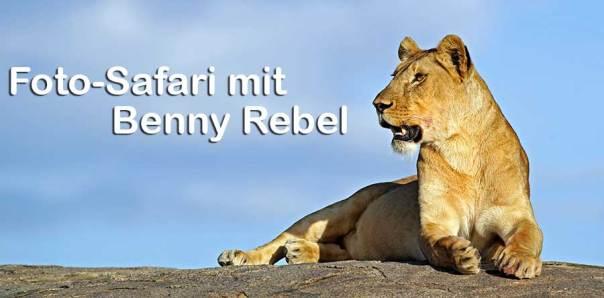 Fotoreise_Fotosafari_Fotoworkshop_Benny-Rebel_Afrika_Tansania_047_Loewe