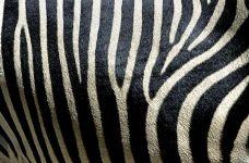 KB-Benny-Rebel-Fotoreise-Zebra-Suedafrika