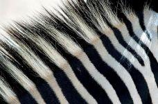 KC-Benny-Rebel-Fotoreise-Zebra-Suedafrika