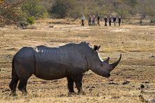 MCA-Benny-Rebel-Fotoreise-Suedafrika-Walking-Safari