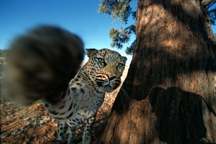 Namibia Süd, Abenteuerfotografie, Tierfotogr