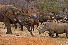 BA-Benny-Rebel-Fotoreise-Suedafrika-Breitmaul-Nashorn
