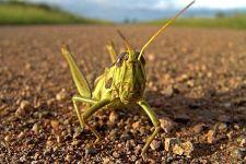 BN-Benny-Rebel-Fotoreise-Suedafrika-Grashuepfer
