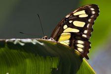 BT-Benny-Rebel-Fotoworkshop-Costa-Rica-Schmetterling