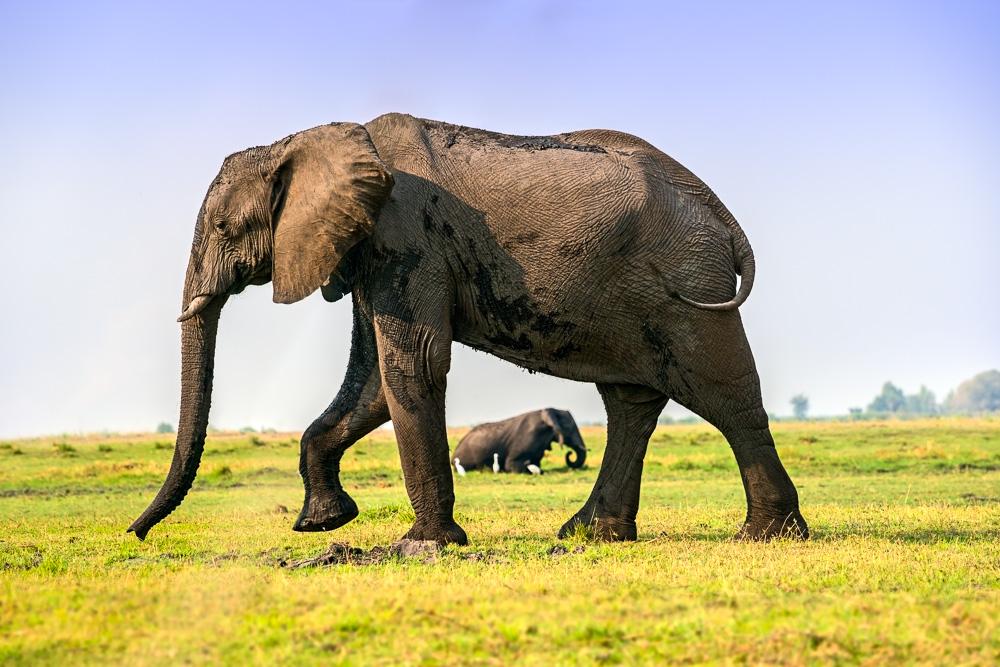 Tiere, Afrika, Safari, Elefant, Elefantenherde