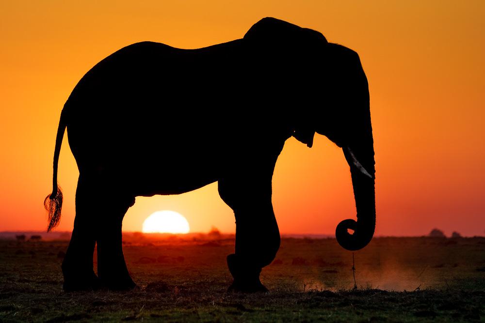 Fotoworkshop mit Benny Rebel, Botswana und Victoria Falls