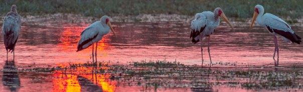 Fotoreise-Fotosafari-Botswana-Simbabwe-Afrika-205