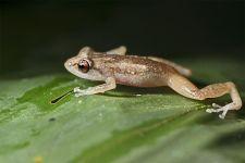 KFA-Benny-Rebel-Fotoreise-Frosch-Costa-Rica