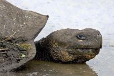 QC-Benny-Rebel-Fotoreise-Riesen-SchildkroeteGalapagos