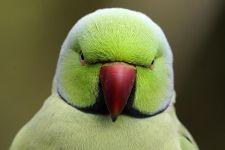 TDCS-Benny-Rebel-Fotoworkshop-Vogelfotografie