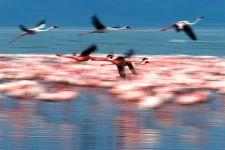 TKB-Benny-Rebel-Fotoreise-Kenia-Flamingo