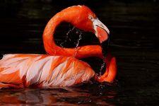 TKDA-Benny-Rebel-Fotoworkshop-Flamingo