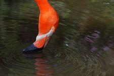 TKDCA-Benny-Rebel-Fotoworkshop-Flamingo