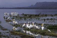 UEAA-Benny-Rebel-Fotoreise-Kenia-Pelikan