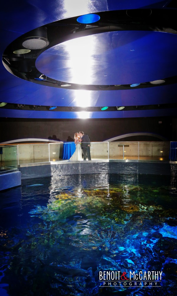 New England Aquarium Wedding