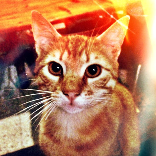Camın Ardındaki Kedi