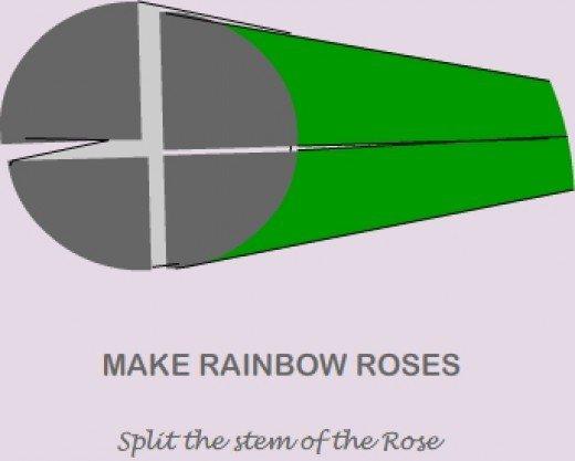 rainbow rose3