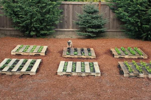 pallet-garden1