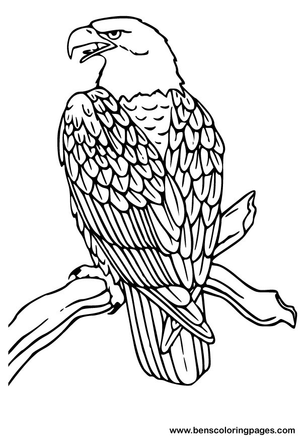 Bald Eagle Feather Coloring Page Coloring Pages