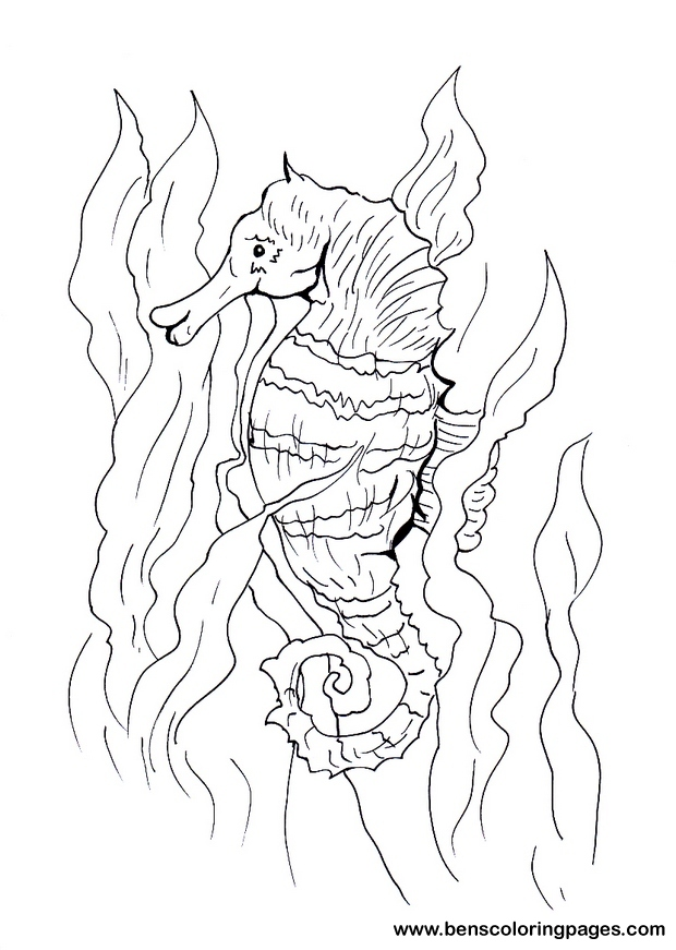 Sea horse free coloring page