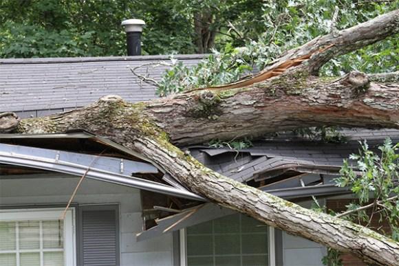Bay Area roof damaged by fallen tree