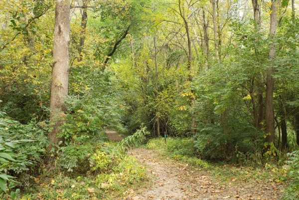 A path in a forest. It's a phot I took near Homer Lake, Illinois.