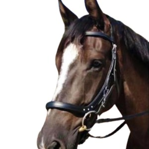 Anatomical Bitted & Bitless Bridle Breathable Headpiece Padded Comfort