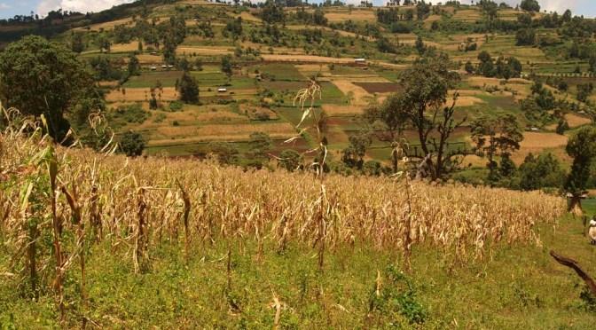 Land Restaurieren – Ein Interview