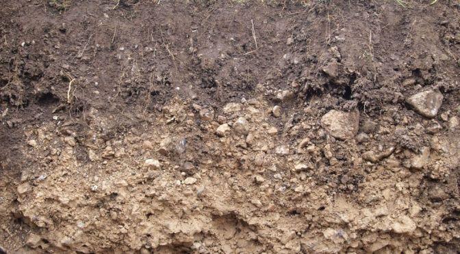 Bodenrestauration in Österreich – ein Interview