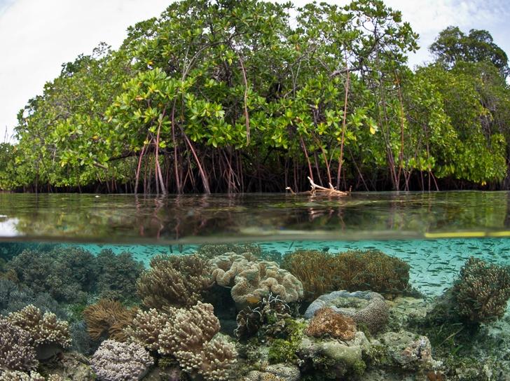 Pemanfaatan Hutan Mangrove Untuk Pengembangan Desa Pesisir – Berdesa