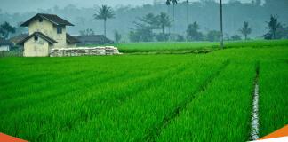 Peluang Usaha Petanian di Desa, Bisa Jadi Bisnis Masa Depan