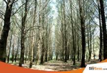 Tiket Masuk Hutan Pinus Pengger