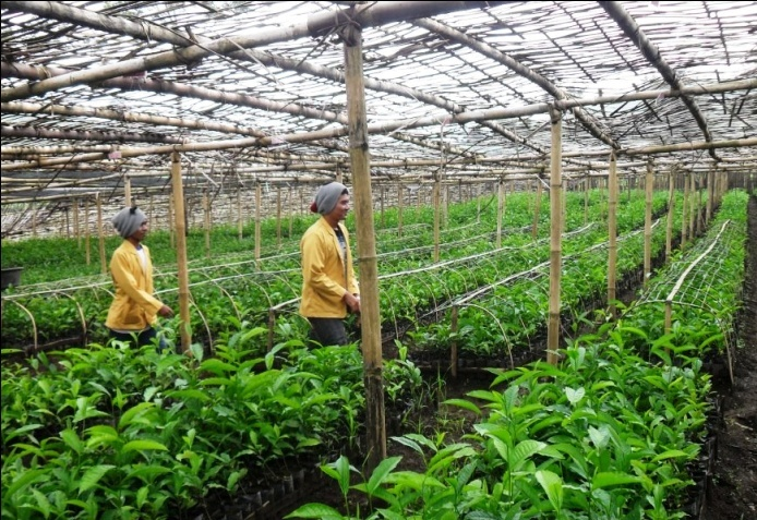 Sumber Daya Alam yang Melimpah di Desa dapat Menjadikan Peluang Usaha di  Desa - Berdesa