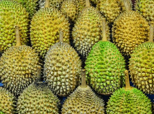 Agrowisata Durian