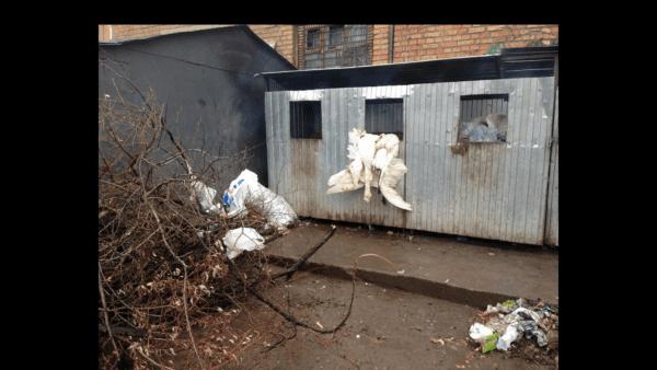В Бердичеве на мусорнике обнаружили выпотрошенные тушки… лебедей