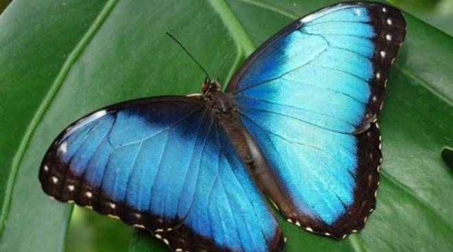 Casa delle farfalle lepidotteri tropicali a Udine  Bergamo News