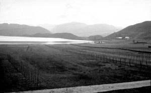 Utbyggingen av Åsane har redusert jordbruksarealet. Foto av myrene ved enden av Langavatnet fra rundt 1960.  Fotograf: Ukjent. Arkivet etter Reguleringsvesenet, Bergen Byarkiv.