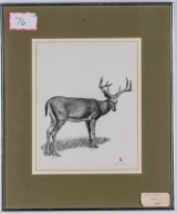"<h5>""Antlers"" by Richard Alfred Botto (N/D)</h5><p>Approx. 12""x16""; Graphic pencil on paper BMAS 1032</p>"