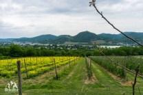 Naturpark Rheinland Feuerroute Siebengebirge Drachenfels