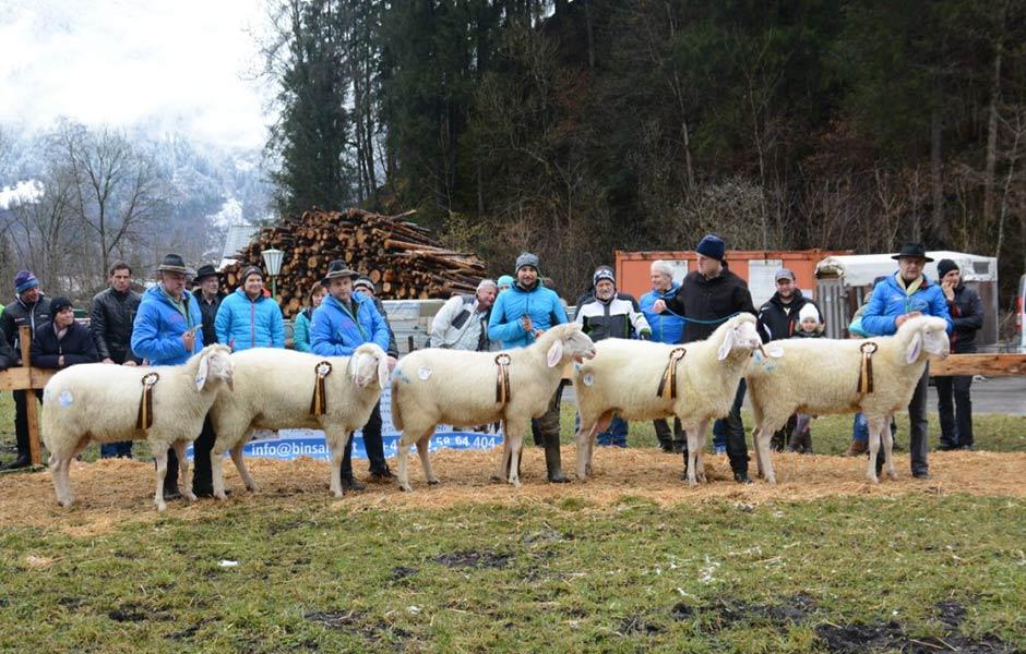 Schafausstellung-Tirol
