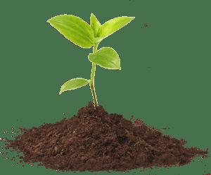 bergsystem_inwestycje_plant