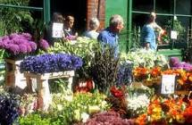 Columbia Road Flower Market 6