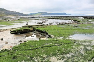 Jurassic Coast - Lyme Regis East Cliff Low Tide 1