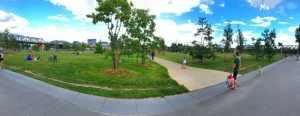 Bild Park am Gleisdreieck