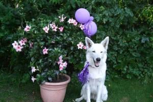 Kindergeburtstag mit Hund feiern