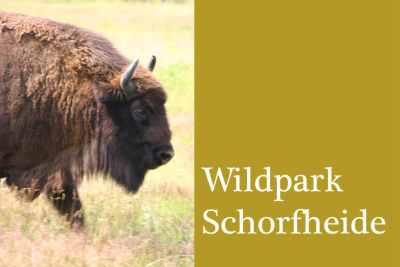 Bild-Wildpark-Schorfheide-groß