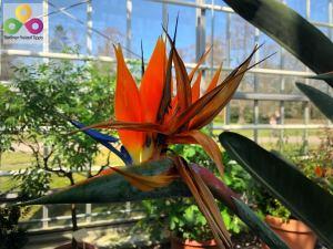 Bild botanischer Garten Pankow