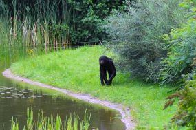 Ein Affe trotzt dem Regenwetter