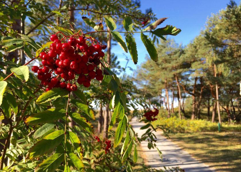 Auch im Herbst ist die Natur an der Ostsee wunderschön.